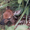 Nature walks around our family cabins give grandparents and kids a chance to view baby animals like this deer fawn.